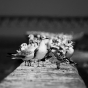 AIRMODUL / фотография